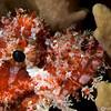 CA172167_edited-2scorpionfish