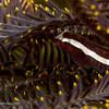 CA182535_edited-2CrinoidFish