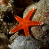 CA193232_edited-2unknownSeaStar