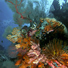 CA172357_edited-2WA_Reef