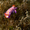 CA203766_edited-2unknownNudi