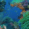 CA172493_edited-2Wa_reef