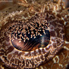 CA214195_edited-2CrocodileFishEye