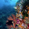 CA172437_edited-2WA_Reef