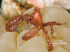 Orangatan crab (1 inch across) on bubble coral