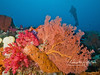 Red soft coral, orange coral fan, and tan sponge.