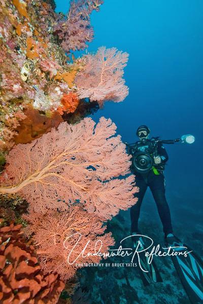 Karen's keen eyes have spotted a small grey nudibranch on the wall above these coral fans.  The longing in her upturned eyes is undoubtedly due to the fact that she has a wide angle lens...