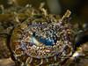 Eyeball of crocadilefish