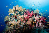 An astounding variety of colorful soft corals, sponges, crinoids and fish on this coral bommie