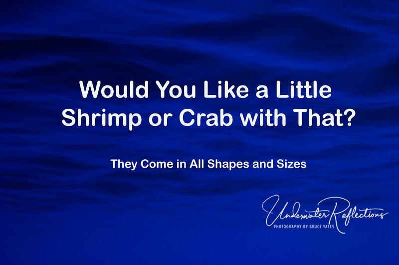 1Title - Shrimps