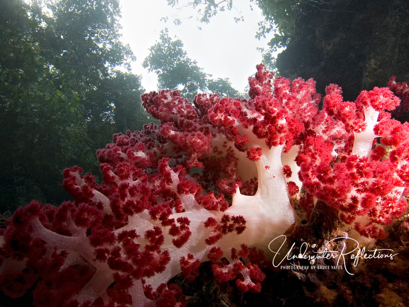 Soft coral with jungle above