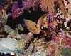 Coral Grouper Scene