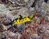 Nudibranch 4