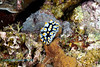 Nudibranch 7