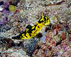 Nudibranch 3