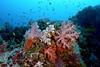Soft Coral Scene 3
