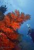 Diver Scene