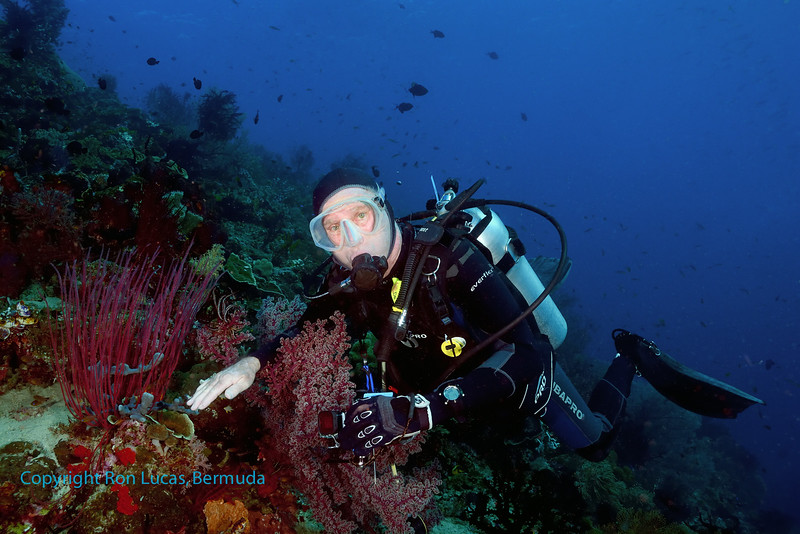 Diver and Seafan