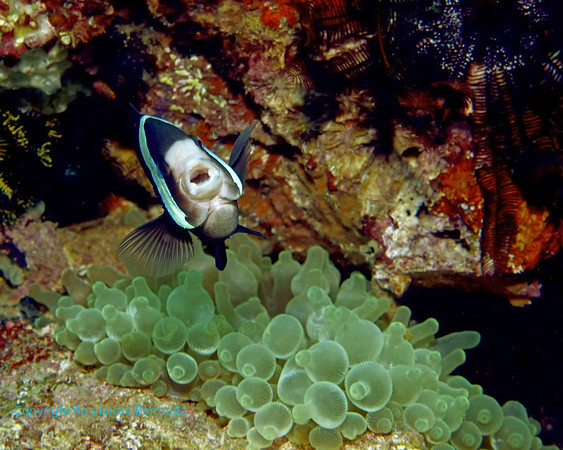 Indonesia - South of Komodo