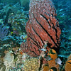 Barrel Sponge Scene