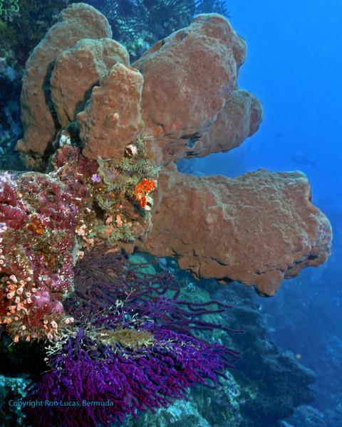 Barrel Sponges on Wall
