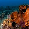 Barrel Sponge Reefscape