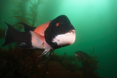 Mike Bartick Shot from Anacapa, friday Canon XTI/400D Ike housing 2 DS 125 strobes sigma 15 mm fish eye
