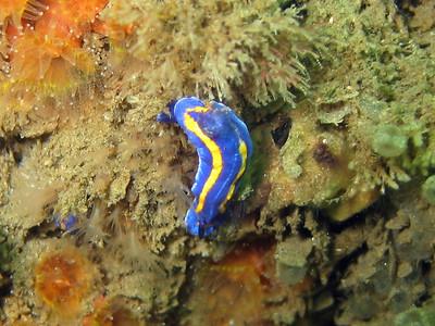 I.C.Elguezabal Big Rock, East reefs Cool Blue-nude (Porter's chromodorid) canon G3 in an Ike