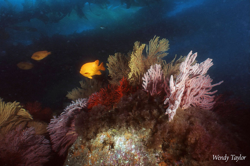 Wendy Melill Taylor