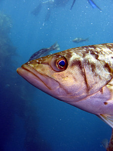 """Adam James Casino Point Dive Buddy Photo TJ Photo Title """"Whats up Dude"""" Camera a540"""
