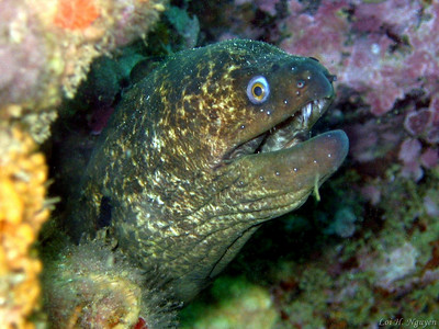 Loi Nguyen Green Moray Eel Laguna Beach, 28 July 2007 Canon Powershot A95