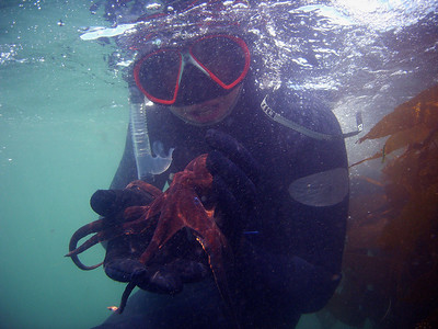 Walt Conklin Two-spot octopus (Octopus bimaculatus) Deer Creek 7/14/07 Sea & Sea DX8000G Tim holding a playful octopus for the 3R's class to view