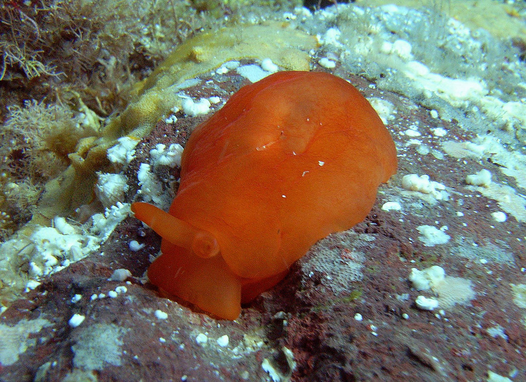 Tim Conklin