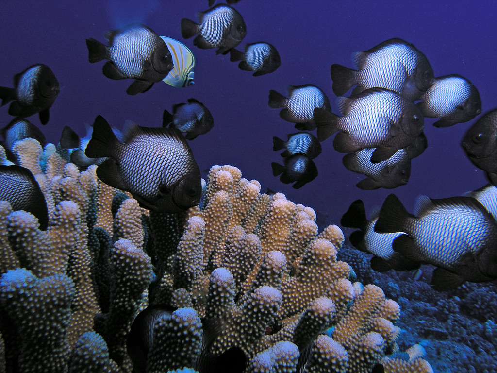 kevin glenn