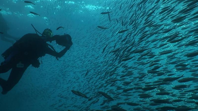 walter marti schooling mackeral oil rig eureka, 9/3/07 Video still Did anyone see any fish?