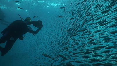 walter marti schooling mackeral oil rig eureka, 9/3/07 Video still Did anyone see any fish?
