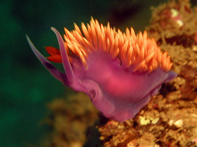 peter gallop spanish shawl buchanan's reef, PV, oct 27th oly 4040, ike housing, video lights