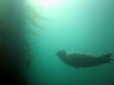 Phil Garner Harbor seal Cabrillo Beach, san pedro, Nov 3rd Camera info: FinePix E900, 1/280th, F4, ISO100