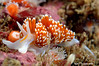 tracy clark<br /> Point Loma, San Diego<br /> Hermissenda crassicornis<br /> D70s, 60mm lens