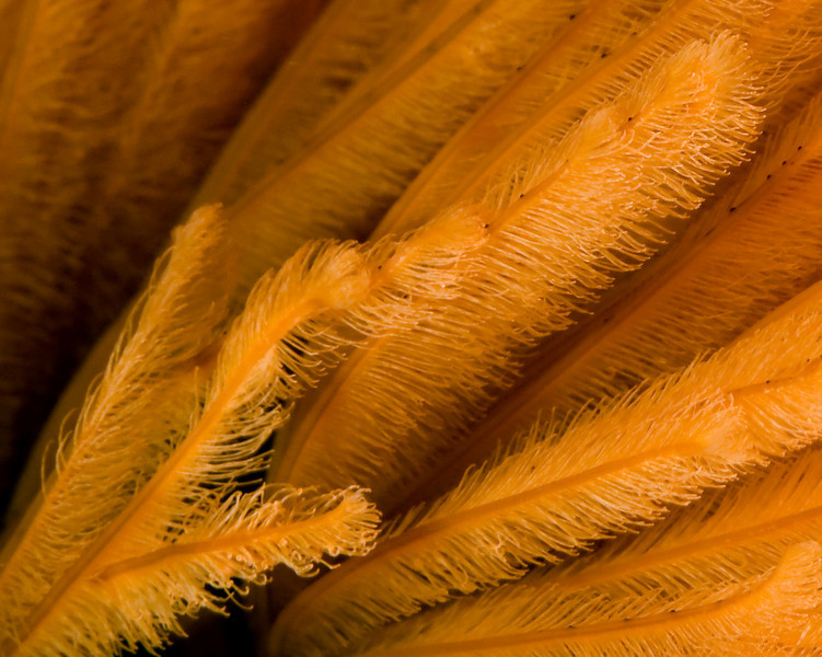 scott gietler<br /> featherduster worm closup<br /> oil rig Elly, Oct 11th<br /> nikon d300, 60mm lens + 1.4x tele, dual strobes