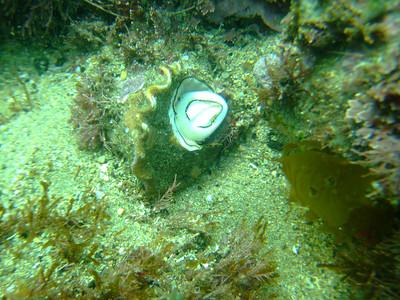 victor morita snail malaga cove Fuji F10