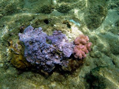 Beautiful Kauai Coral