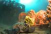 The USCG Duane shipwreck, Florida Keys