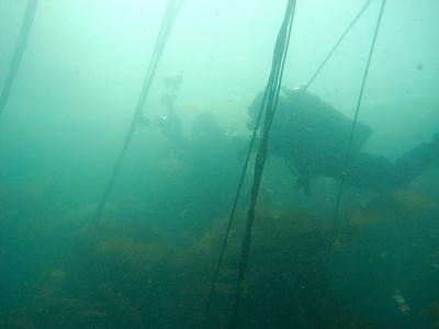 Diver silouettes