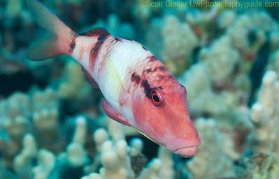 Additional Underwater Photos