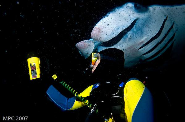 Diver with Manta Ray