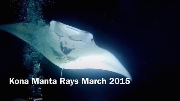 Kona Manta Rays March 2015