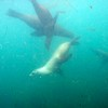 Sea Lion!