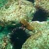 Sea Cucumber and Sea Slugs.