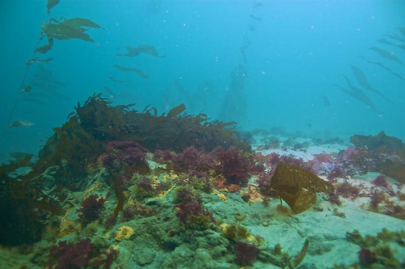 Underwater Seascape.